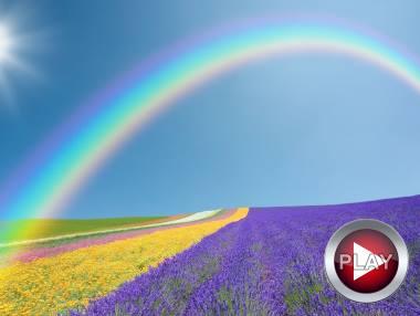 Цветотерапия – чудеса лечения цветом